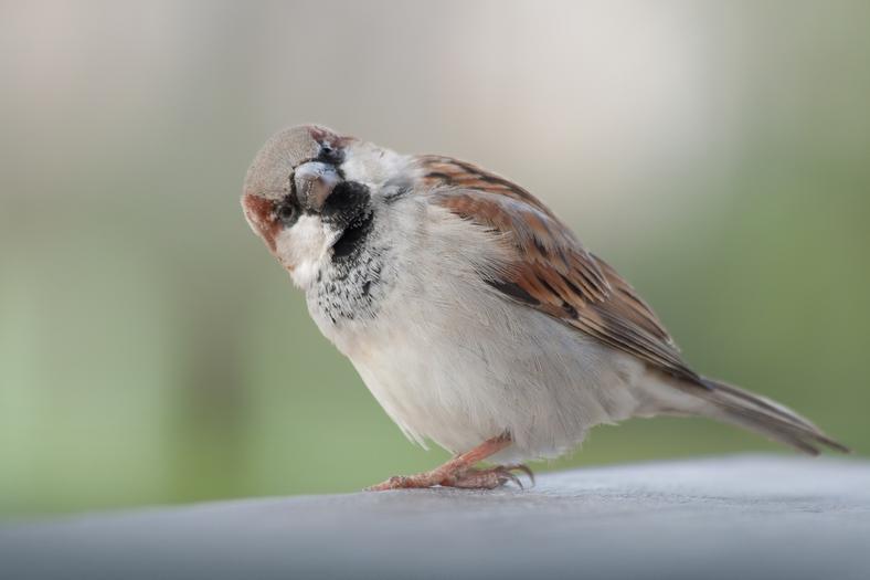 Ptaki migrujące i zimujące.