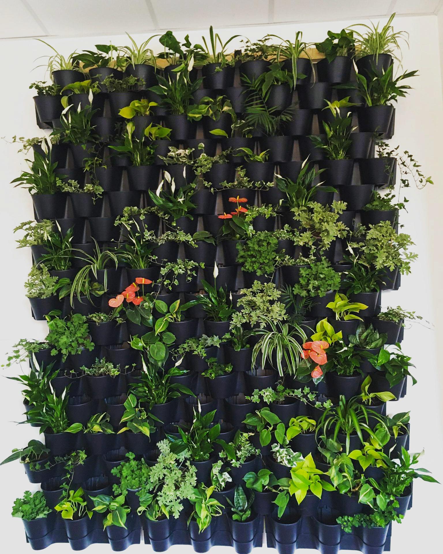 Zielone ściany dla zdrowia psychicznego uczniów - SP Niemcz.jpg
