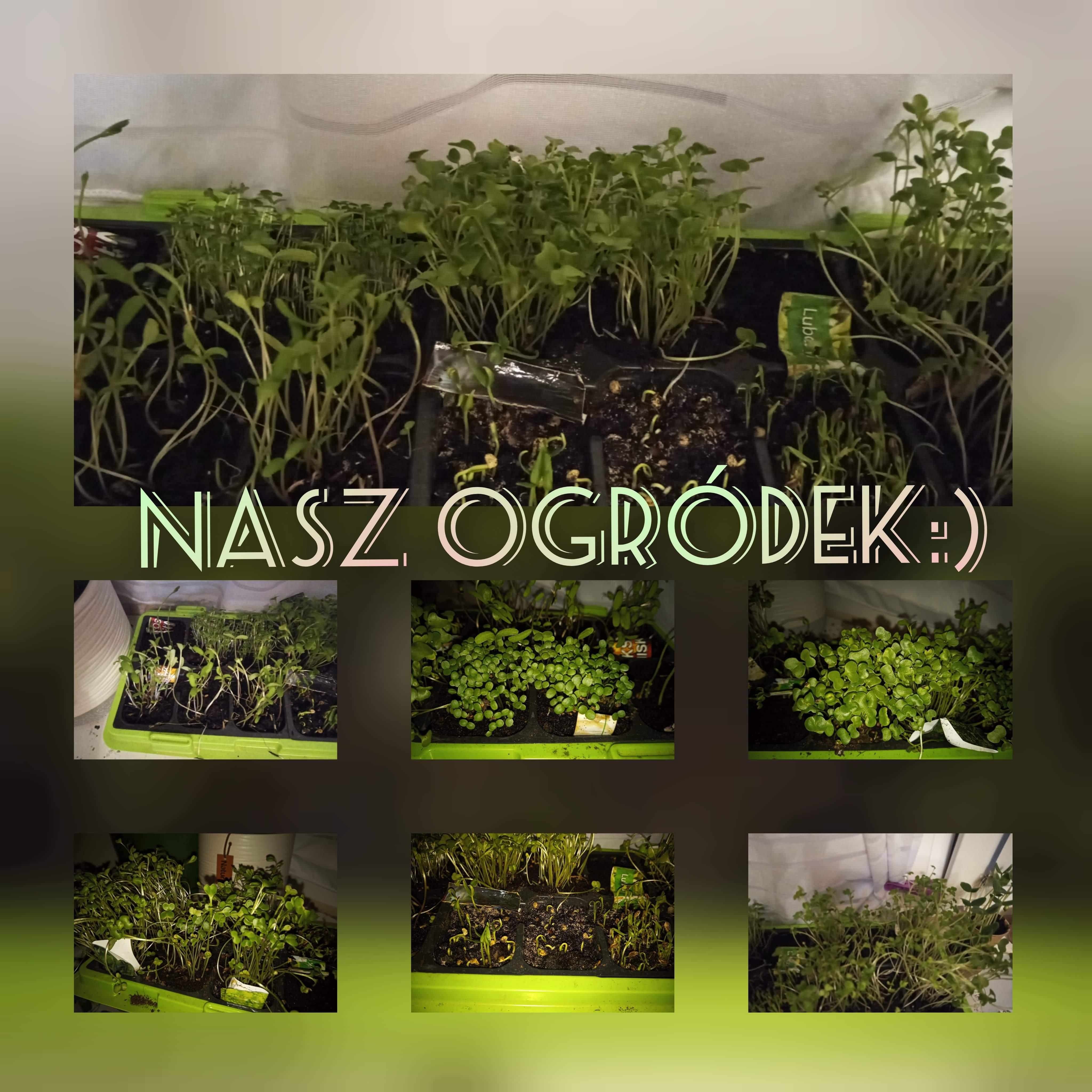 Ogródek warzywny.jpeg