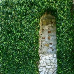 Zielone ściany - dbamy o zdrowie psychiczne uczniów i uczennic.