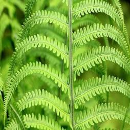 Zielono nam w głowie i nie tylko - czyli zielona strefa w Orkanie
